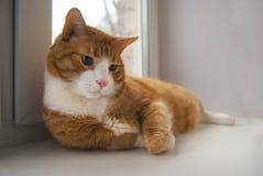 说谎在窗台的逗人喜爱的红色猫 图库摄影