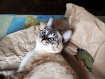 说谎在纸的猫 库存照片