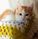 说谎在编织格子花呢披肩的小猫 库存图片