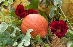 说谎在花坛上的大美丽的成熟南瓜在玫瑰旁边 库存照片