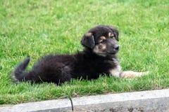 说谎在草坪的小狗 免版税库存图片