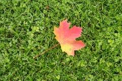 说谎在草的秋天叶子 库存照片