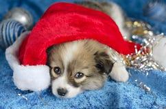 说谎在蓝色背景的小的小狗 在红色圣诞老人帽子,选择聚焦 库存图片