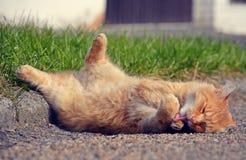 说谎在街道上的姜猫 库存图片