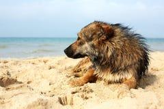 说谎在街道上的孤立哀伤的狗 杂种 免版税库存照片