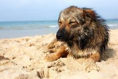 说谎在街道上的孤立哀伤的狗 杂种 免版税库存图片