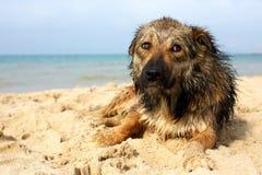 说谎在街道上的孤立哀伤的狗 杂种 图库摄影