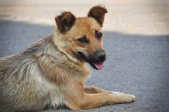 说谎在街道上的流浪狗 免版税库存照片
