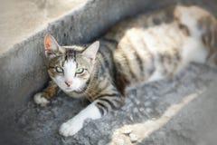 说谎在街道的猫 图库摄影