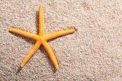 说谎在金黄海滩沙子的海星 库存照片