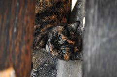 说谎在长凳下的生锈的色的野生猫 免版税图库摄影