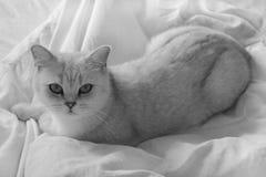 说谎在长沙发的猫 库存照片