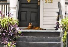 说谎在门廊的橙色镶边猫 库存图片