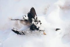 死说谎在雪的结冰的黑乌鸦 库存照片