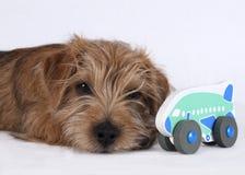 说谎在婴孩玩具旁边的小狗 免版税库存图片