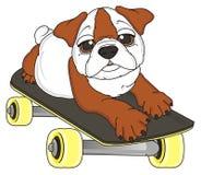 说谎在滑板的牛头犬 图库摄影