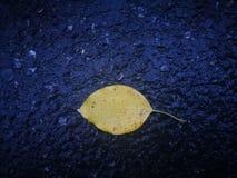 说谎在黑路的黄色叶子 图库摄影