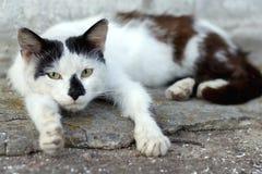 说谎在stre的路面的一只哀伤的无家可归的猫的画象 库存照片