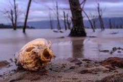说谎由湖边的一条死的鱼 免版税库存图片