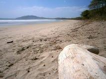 说谎的日志空的舒展海滩 免版税库存照片