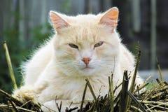 说谎的桃色的猫 免版税库存图片