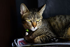 说谎的猫 库存图片