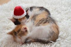 说谎的睡觉小猫 免版税库存照片