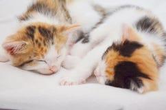 说谎的睡觉小猫 库存图片