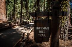 谢尔曼树足迹 库存图片