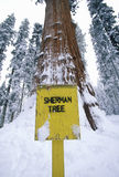谢尔曼Redwood Tree将军在冬天,美洲杉国家公园,加利福尼亚 库存照片