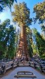 谢尔曼Sequoia Tree将军 免版税库存照片