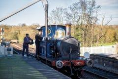 谢菲尔德公园,东部SUSSEX/UK - 11月22日:会开蓝色钟形花的草蒸汽Tr 免版税库存图片