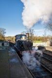 谢菲尔德公园,东部SUSSEX/UK - 11月22日:会开蓝色钟形花的草蒸汽Tr 图库摄影