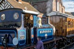 谢菲尔德公园,东部SUSSEX/UK - 11月22日:会开蓝色钟形花的草蒸汽Tr 库存照片