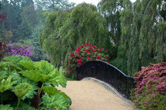 谢菲尔德公园, SUSSEX/UK - 6月11日:Rhodendrons在谢菲尔德P 库存图片