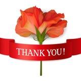 谢谢拟订与唯一现实花和红色丝带 库存照片