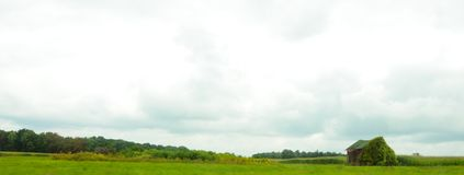谷仓长满与在国家庄稼领域的葡萄树 图库摄影