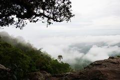 谷充满雾 库存图片