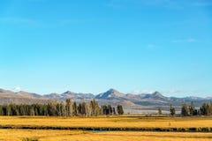 谷和山在黄石 免版税图库摄影
