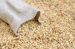 谷物五谷播种在袋子驱散的燕麦 库存图片