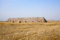 谷物农田 免版税库存照片