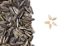 谷物剥壳的种子向日葵 库存照片