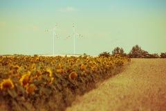 谷物和向日葵领域视图 免版税图库摄影