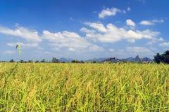 谷物和天空 库存图片
