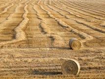 谷物堆 免版税库存照片