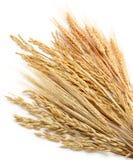 谷物工厂 免版税库存图片