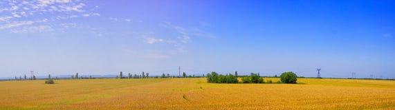 谷物庄稼的全景领域 免版税库存图片