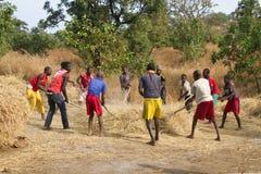 谷物汇集在非洲 免版税库存照片
