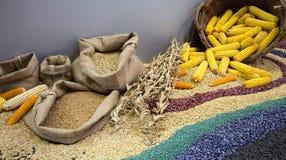 谷物种子和玉米棒子的分类 免版税库存图片