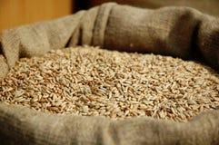 谷物袋装的麦子 免版税图库摄影